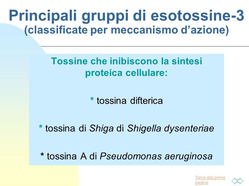 Torna alla prima pagina Principali gruppi di esotossine-3 (classificate per meccanismo dazione) Tossine che inibiscono la sintesi proteica cellulare: