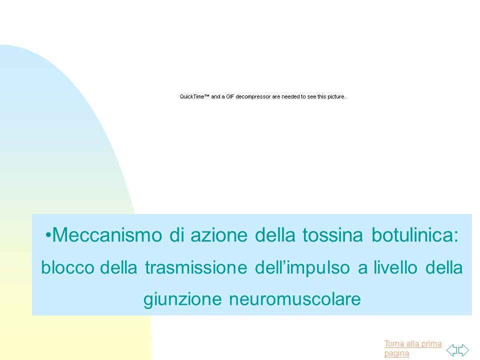 Torna alla prima pagina Meccanismo di azione della tossina botulinica: blocco della trasmissione dellimpulso a livello della giunzione neuromuscolare