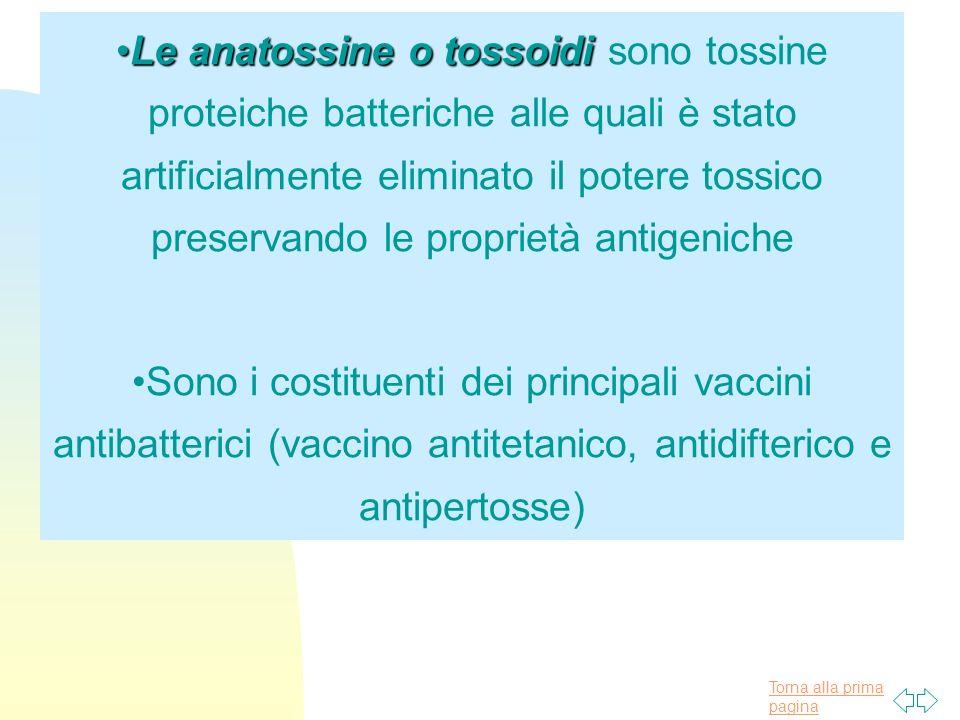 Torna alla prima pagina Le anatossine o tossoidiLe anatossine o tossoidi sono tossine proteiche batteriche alle quali è stato artificialmente eliminat