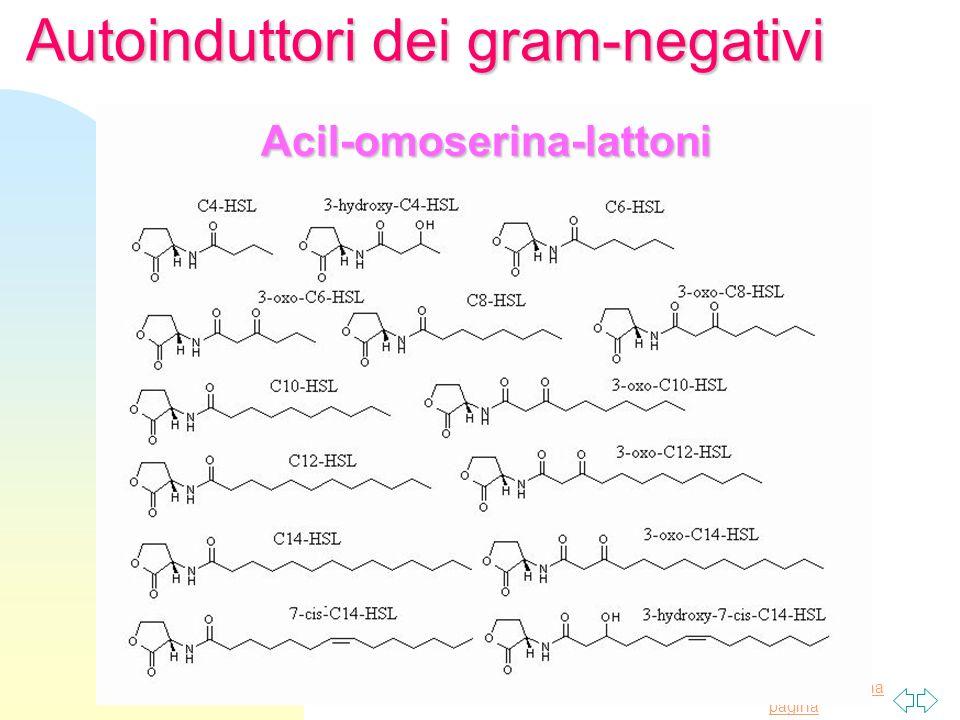 Torna alla prima pagina Autoinduttori dei gram-negativi Acil-omoserina-lattoni
