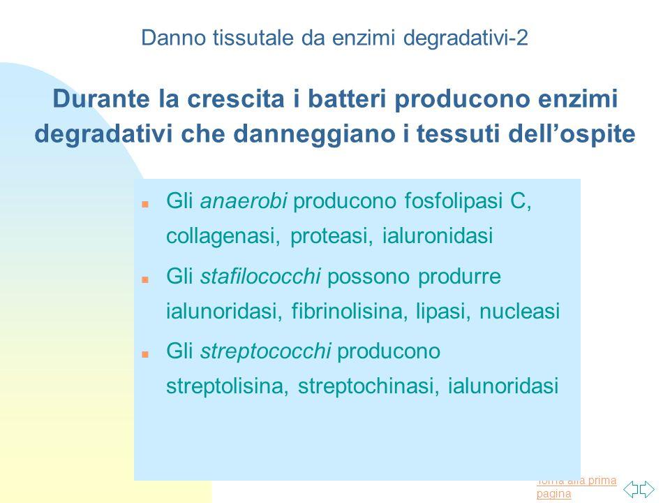 Torna alla prima pagina Danno tissutale da enzimi degradativi-2 Durante la crescita i batteri producono enzimi degradativi che danneggiano i tessuti d