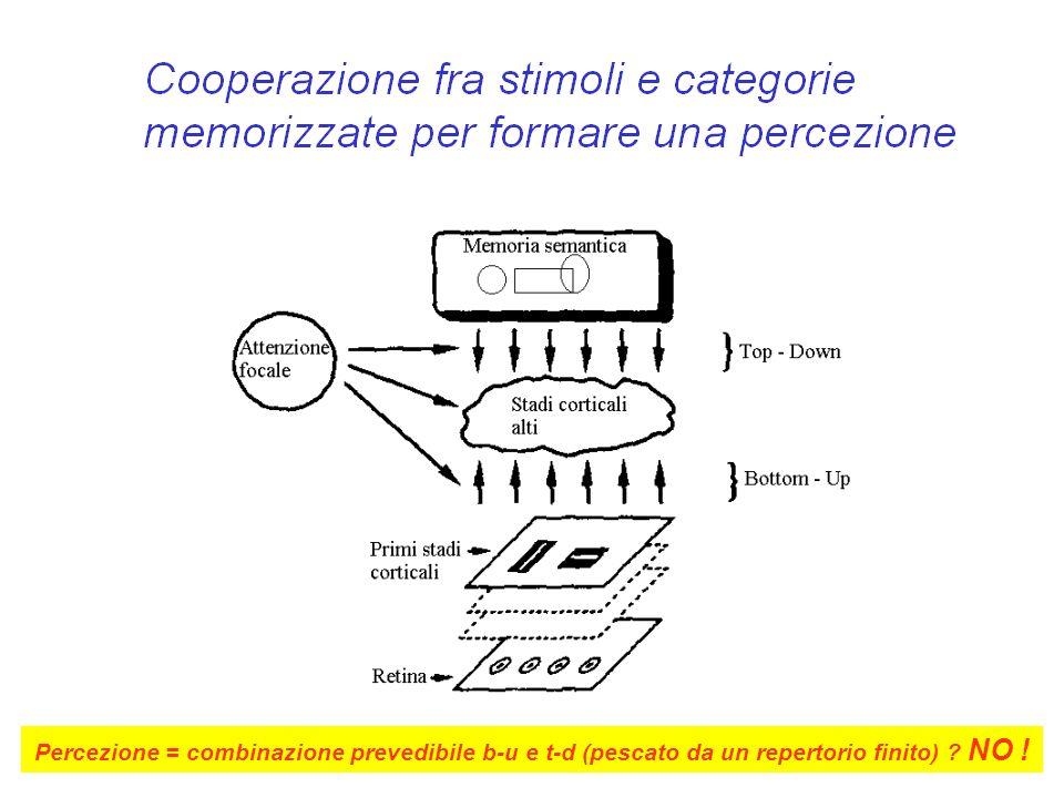 Percezione = combinazione prevedibile b-u e t-d (pescato da un repertorio finito) ? NO !