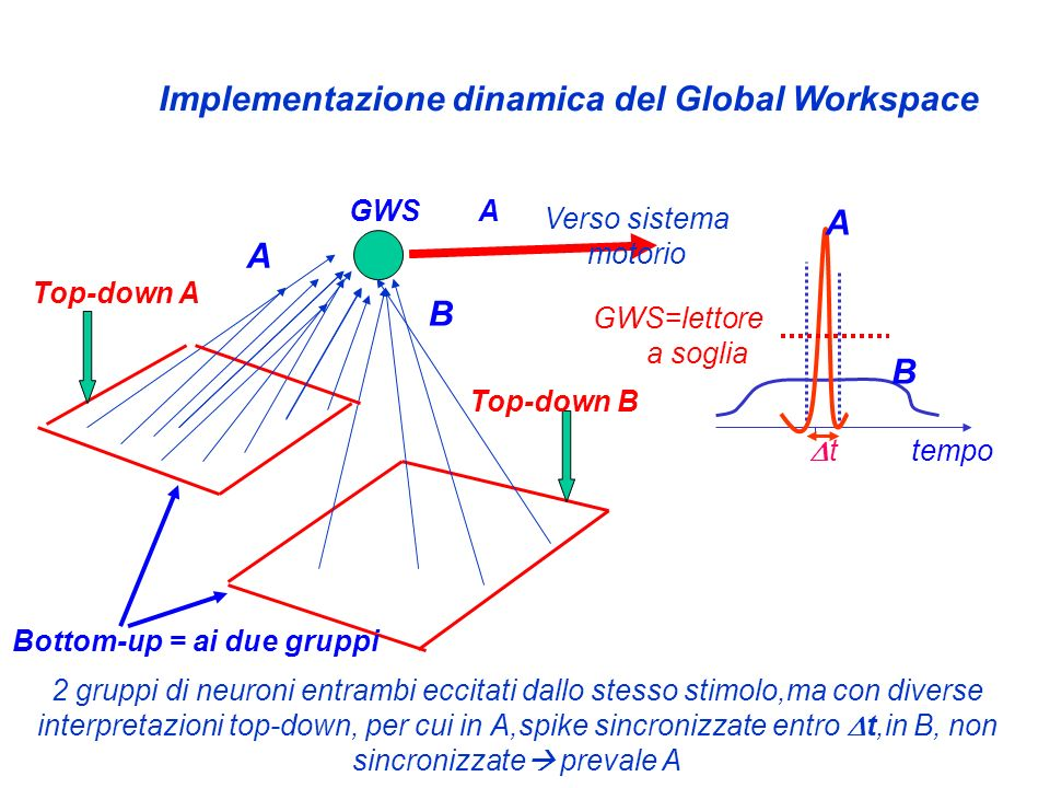 Implementazione dinamica del Global Workspace GWS Verso sistema motorio 2 gruppi di neuroni entrambi eccitati dallo stesso stimolo,ma con diverse inte