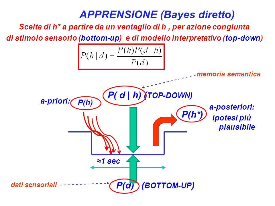 P(d) ( BOTTOM-UP ) P(h*) 1 sec P( d | h) ( TOP-DOWN) APPRENSIONE (Bayes diretto) Scelta di h* a partire da un ventaglio di h, per azione congiunta di