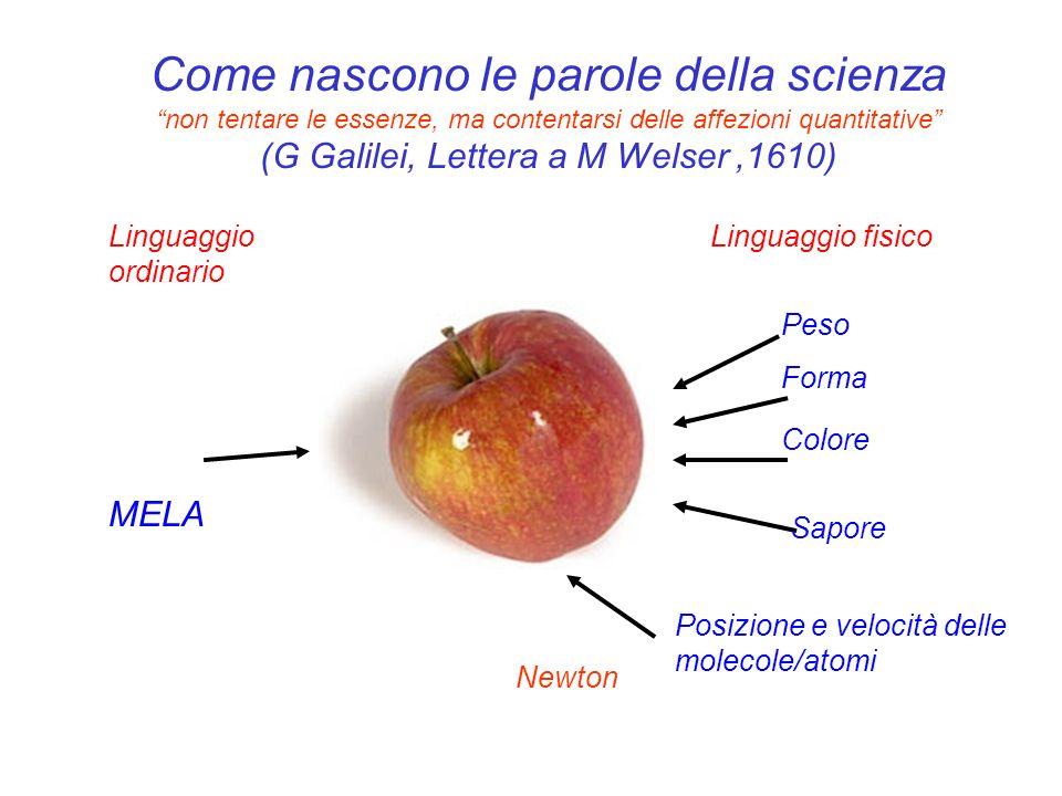 Come nascono le parole della scienza non tentare le essenze, ma contentarsi delle affezioni quantitative (G Galilei, Lettera a M Welser,1610) MELA Lin
