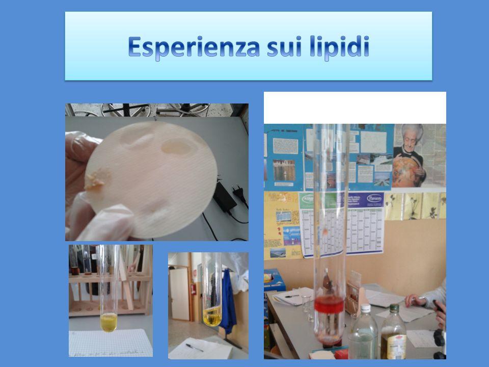 carta filtro; pipette; spatolina; olio; acqua; mortadella e cipolla frullata ; carta filtro; pipette; spatolina; olio; acqua; mortadella e cipolla frullata ;