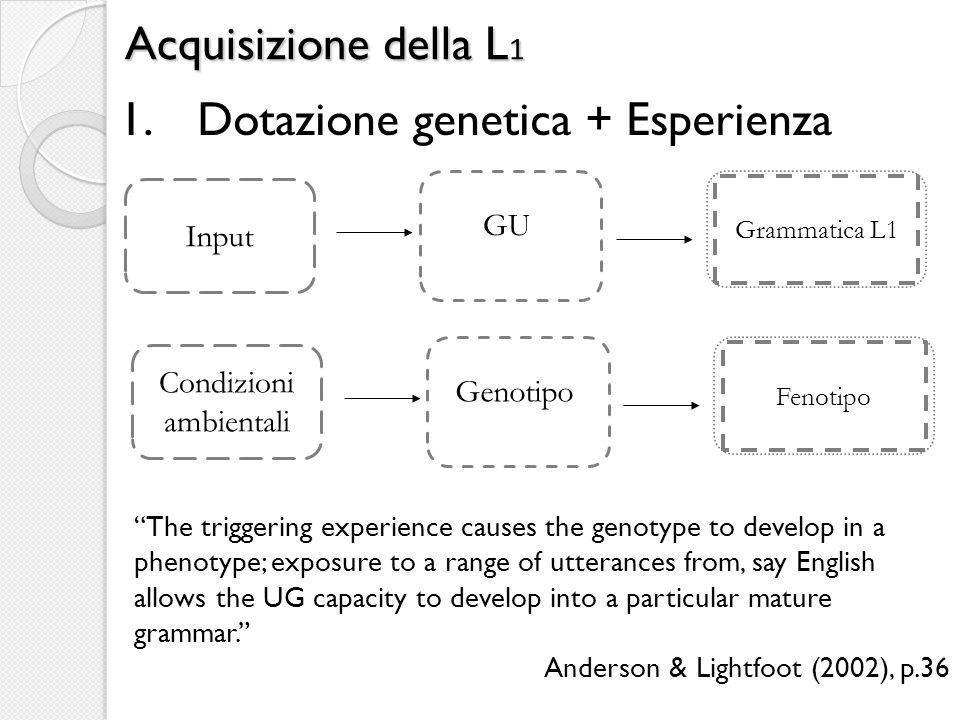 Acquisizione della L 1 1.Dotazione genetica + Esperienza The triggering experience causes the genotype to develop in a phenotype; exposure to a range