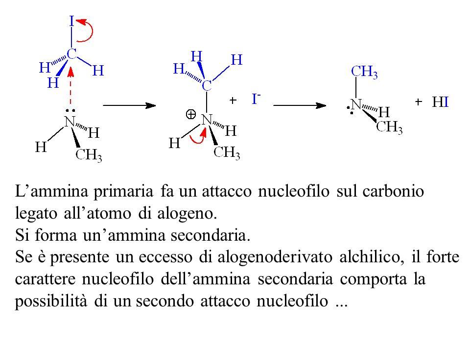Lammina primaria fa un attacco nucleofilo sul carbonio legato allatomo di alogeno. Si forma unammina secondaria. Se è presente un eccesso di alogenode