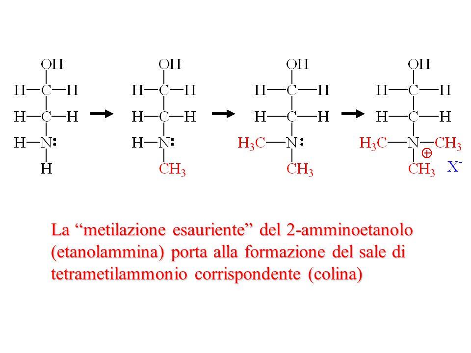 La metilazione esauriente del 2-amminoetanolo (etanolammina) porta alla formazione del sale di tetrametilammonio corrispondente (colina)