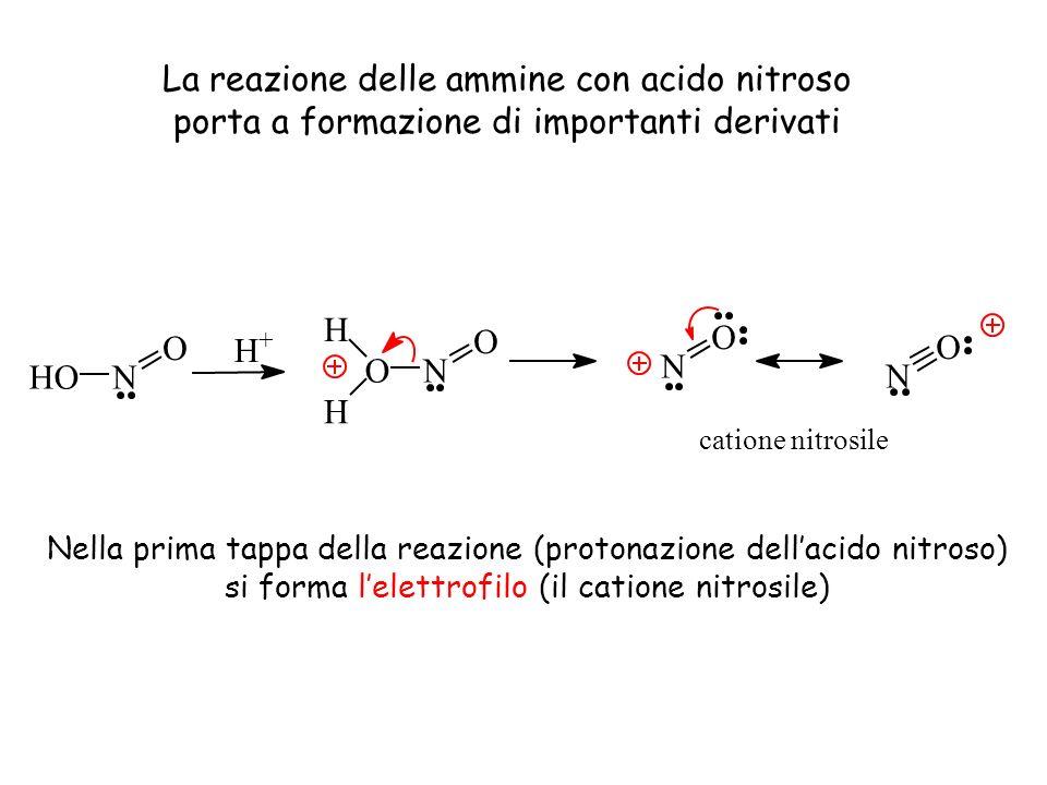 La reazione delle ammine con acido nitroso porta a formazione di importanti derivati N O ON O H H H + HON O N O catione nitrosile Nella prima tappa de