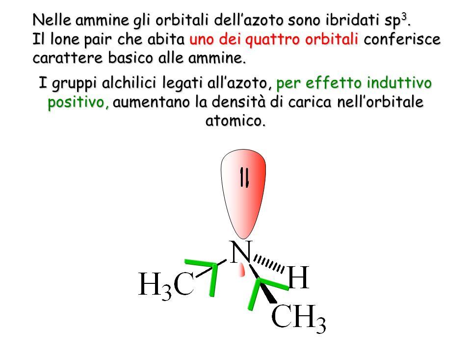 Nelle ammine gli orbitali dellazoto sono ibridati sp 3. Il lone pair che abita uno dei quattro orbitali conferisce carattere basico alle ammine. I gru