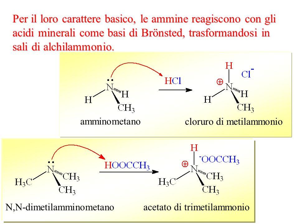 N,N-dimetilamminometanoacetato di trimetilammonio Per il loro carattere basico, le ammine reagiscono con gli acidi minerali come basi di Brönsted, tra