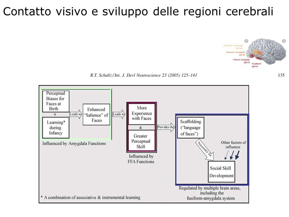 3 Contatto visivo e sviluppo delle regioni cerebrali
