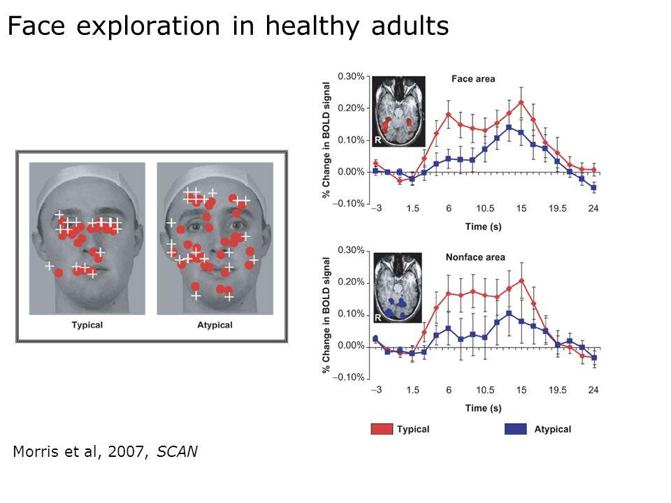 31 Face exploration in healthy adults Morris et al, 2007, SCAN