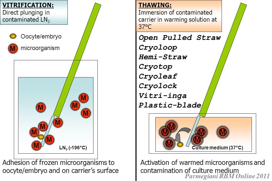 Risultati La sterilizzazione UV di LN 2 accoppiata con stoccaggio ermetico non influenza negativamente la competenza di sviluppo degli ovociti vitrificati