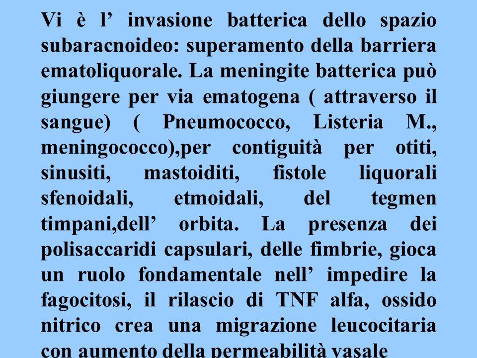 Vi è l invasione batterica dello spazio subaracnoideo: superamento della barriera ematoliquorale. La meningite batterica può giungere per via ematogen