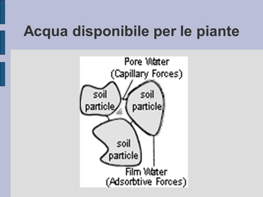 Acqua disponibile per le piante
