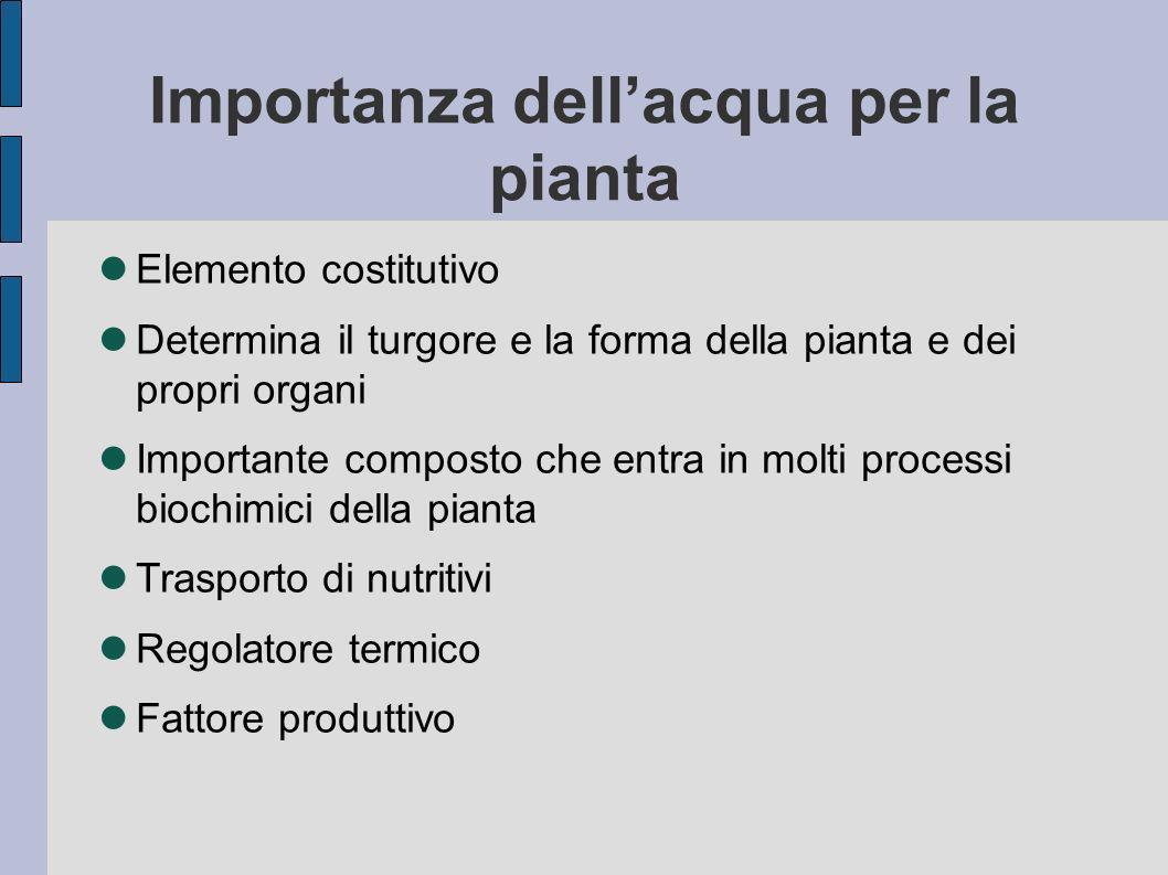 Importanza dellacqua per la pianta Elemento costitutivo Determina il turgore e la forma della pianta e dei propri organi Importante composto che entra in molti processi biochimici della pianta Trasporto di nutritivi Regolatore termico Fattore produttivo