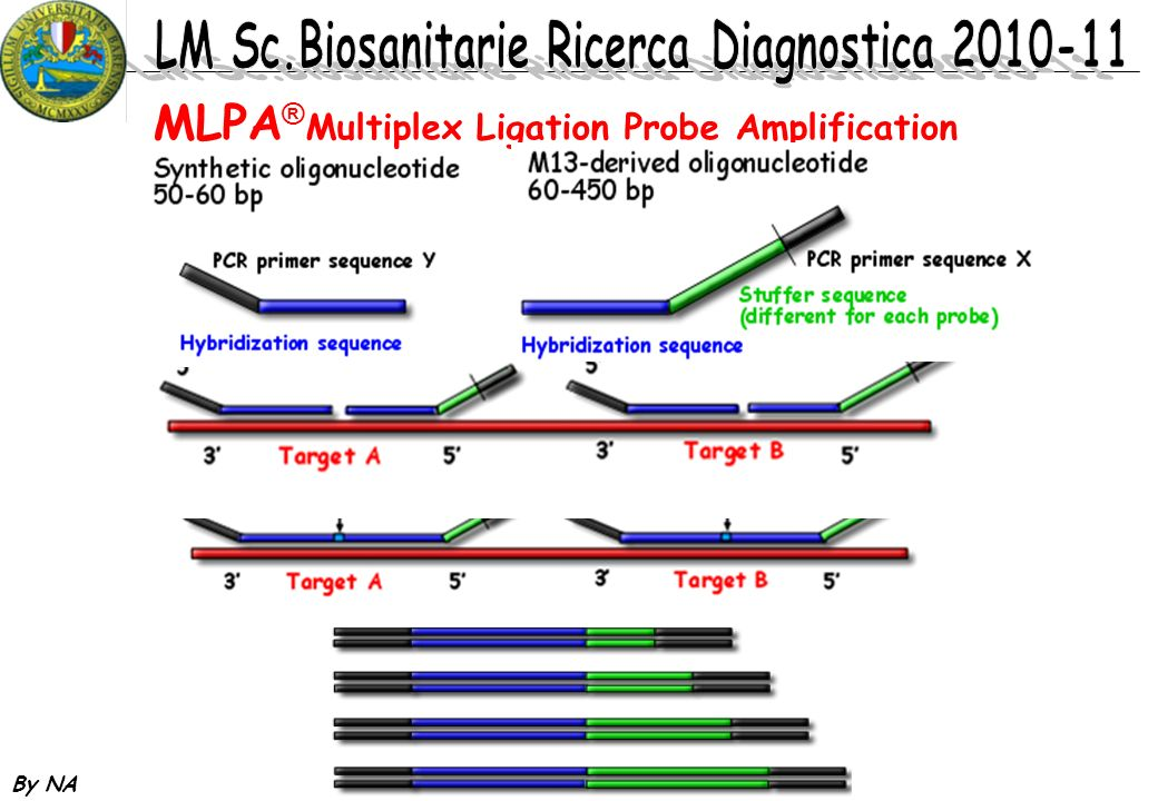 By NA MLPA ® Multiplex Ligation Probe Amplification
