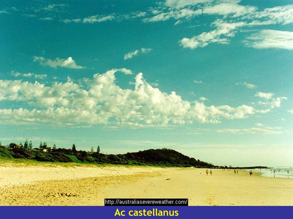 Ac castellanus