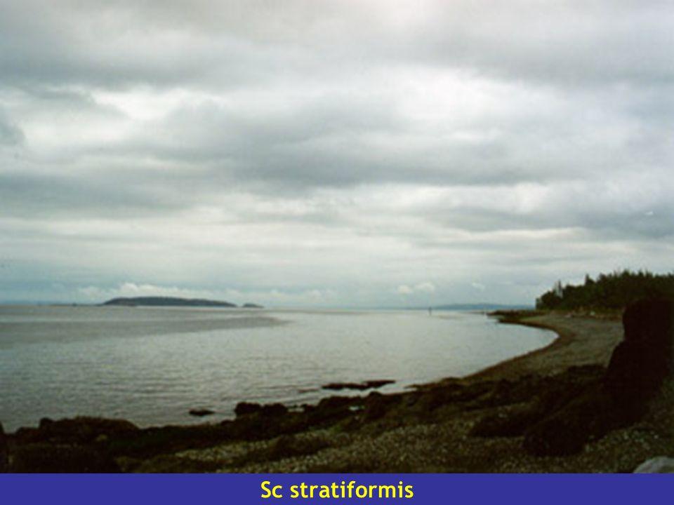 Sc stratiformis