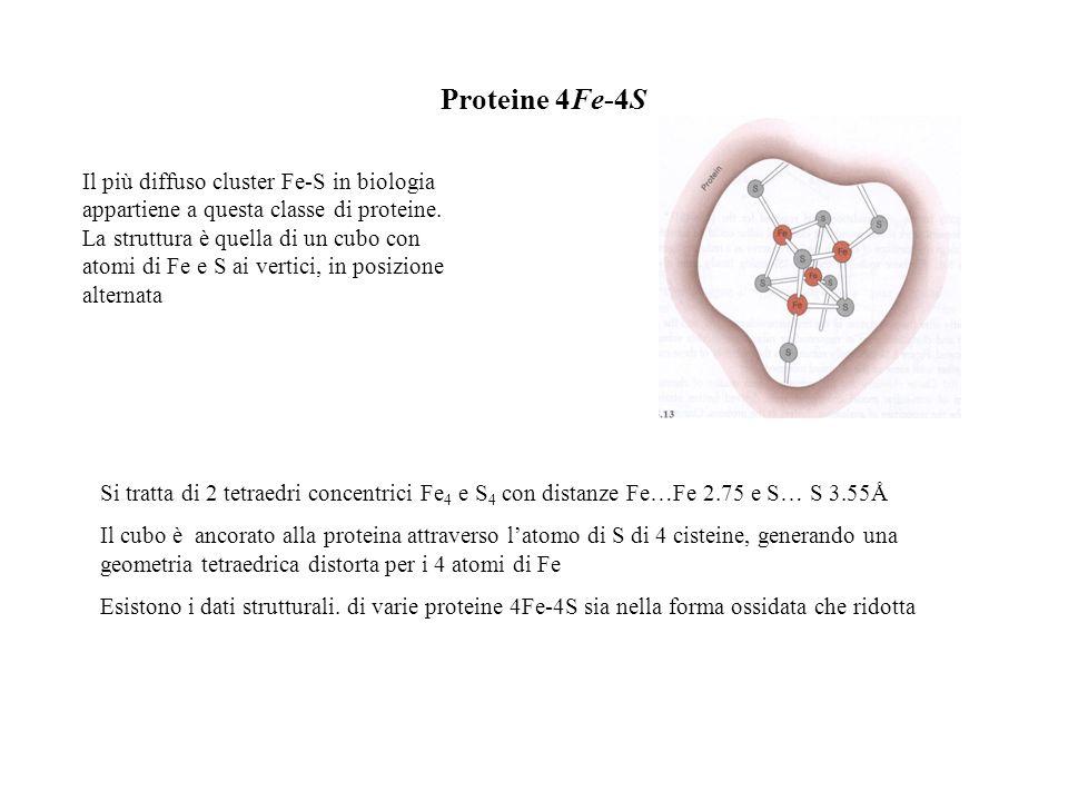 Proteine 4Fe-4S Si tratta di 2 tetraedri concentrici Fe 4 e S 4 con distanze Fe…Fe 2.75 e S… S 3.55Å Il cubo è ancorato alla proteina attraverso latom