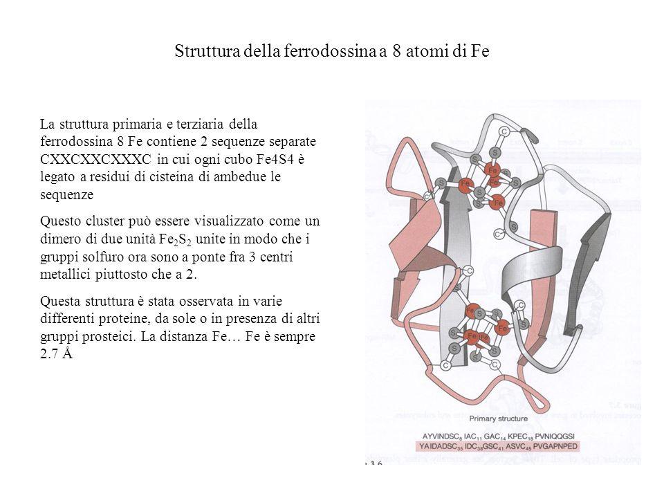 Struttura della ferrodossina a 8 atomi di Fe La struttura primaria e terziaria della ferrodossina 8 Fe contiene 2 sequenze separate CXXCXXCXXXC in cui
