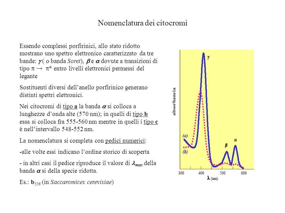 Nomenclatura dei citocromi Essendo complessi porfirinici, allo stato ridotto mostrano uno spettro elettronico caratterizzato da tre bande: ( o banda S