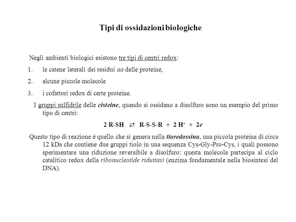 Tipi di ossidazioni biologiche Negli ambienti biologici esistono tre tipi di centri redox: 1.le catene laterali dei residui aa delle proteine, 2.alcun