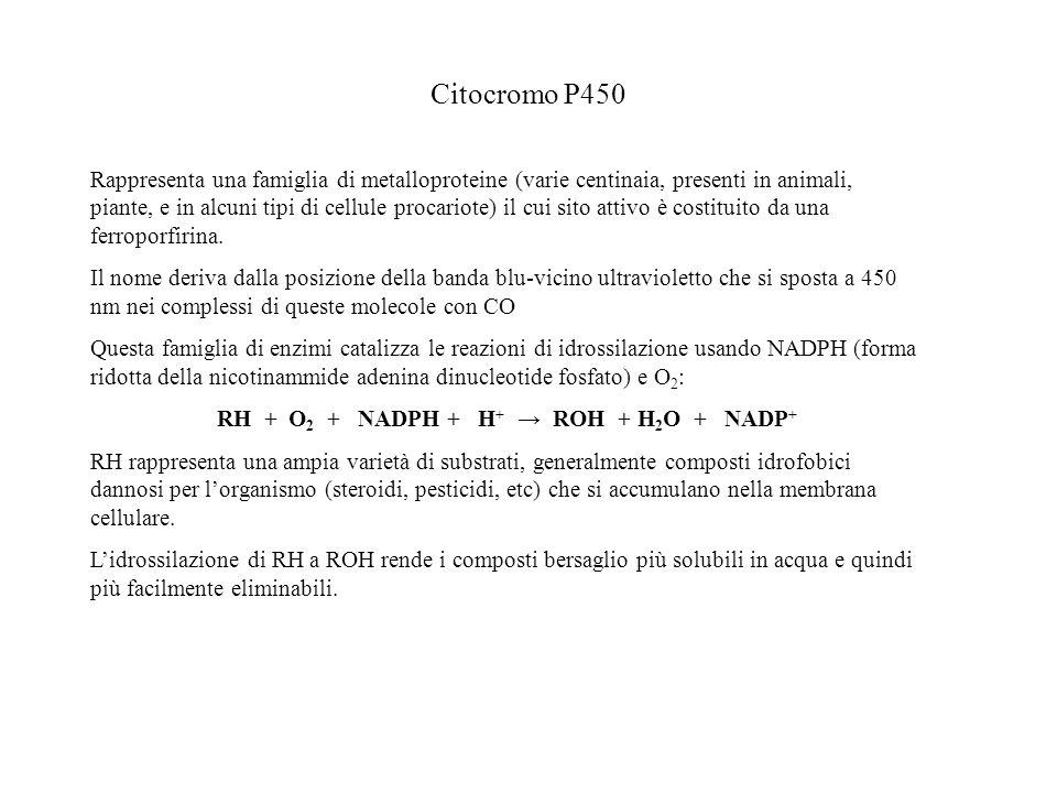 Citocromo P450 Rappresenta una famiglia di metalloproteine (varie centinaia, presenti in animali, piante, e in alcuni tipi di cellule procariote) il c