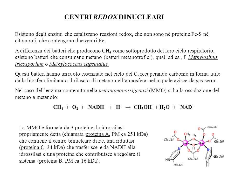 CENTRI REDOX DINUCLEARI Esistono degli enzimi che catalizzano reazioni redox, che non sono nè proteine Fe-S né citocromi, che contengono due centri Fe