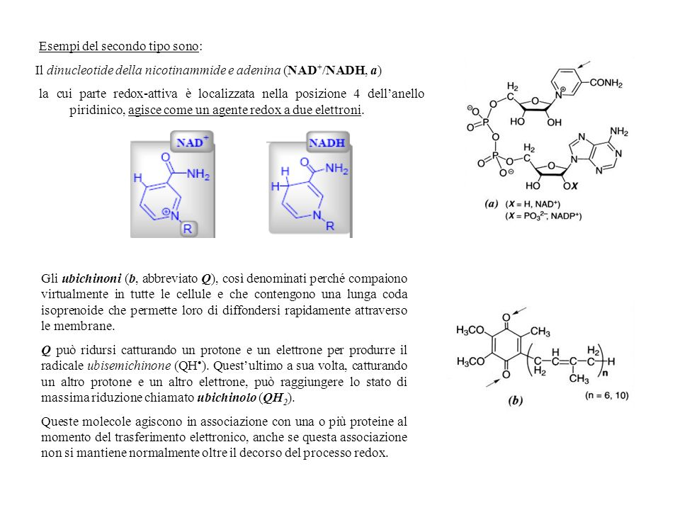 Esempi del secondo tipo sono: Il dinucleotide della nicotinammide e adenina (NAD + /NADH, a) la cui parte redox-attiva è localizzata nella posizione 4