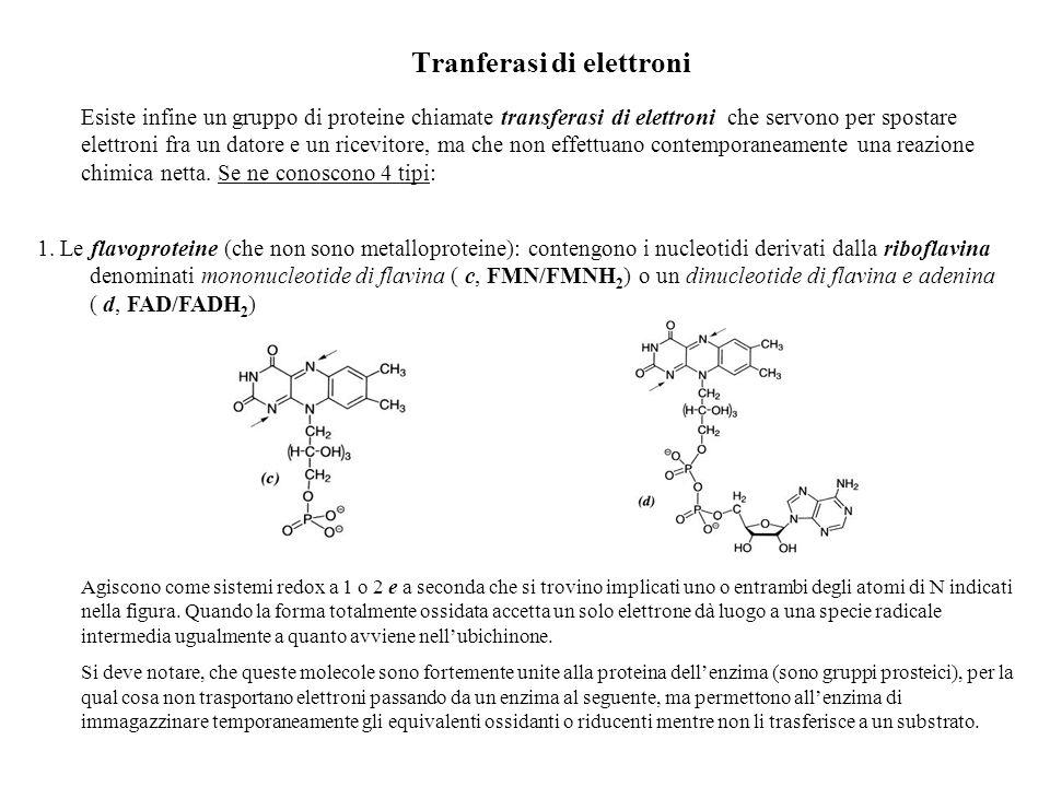 Gli altri tipi di transferasi elettronica sono costituiti da: 1.Le proteine azzurre di rame 2.I citocromi 3.le proteine ferro-zolfo.