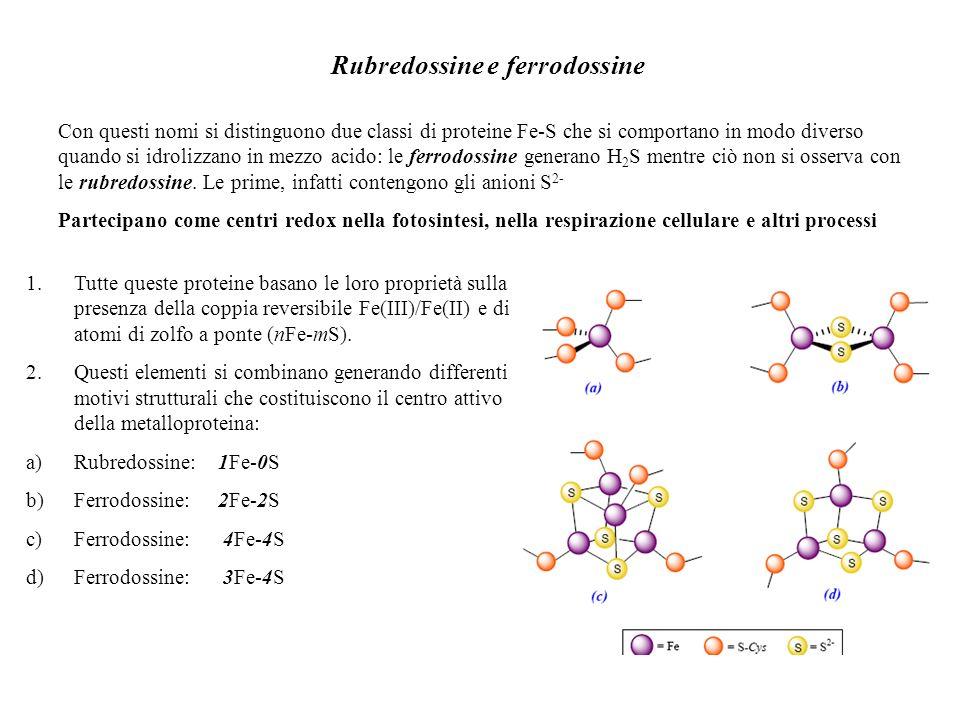 Rubredossine e ferrodossine Con questi nomi si distinguono due classi di proteine Fe-S che si comportano in modo diverso quando si idrolizzano in mezz