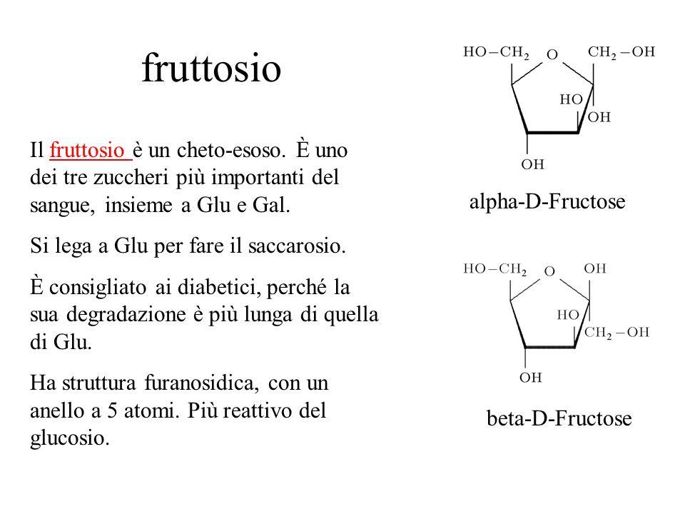 fruttosio Il fruttosio è un cheto-esoso. È uno dei tre zuccheri più importanti del sangue, insieme a Glu e Gal.fruttosio Si lega a Glu per fare il sac