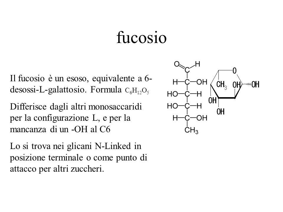 fucosio Il fucosio è un esoso, equivalente a 6- desossi-L-galattosio. Formula C 6 H 12 O 5 Differisce dagli altri monosaccaridi per la configurazione