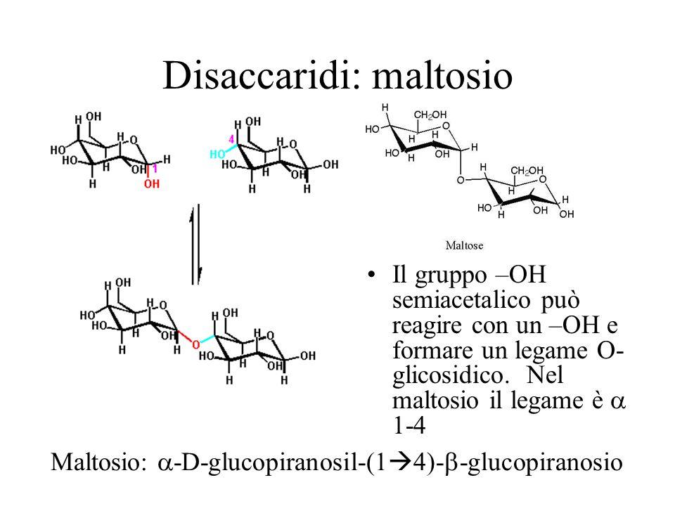 Disaccaridi: maltosio Il gruppo –OH semiacetalico può reagire con un –OH e formare un legame O- glicosidico. Nel maltosio il legame è 1-4 Maltosio -D-