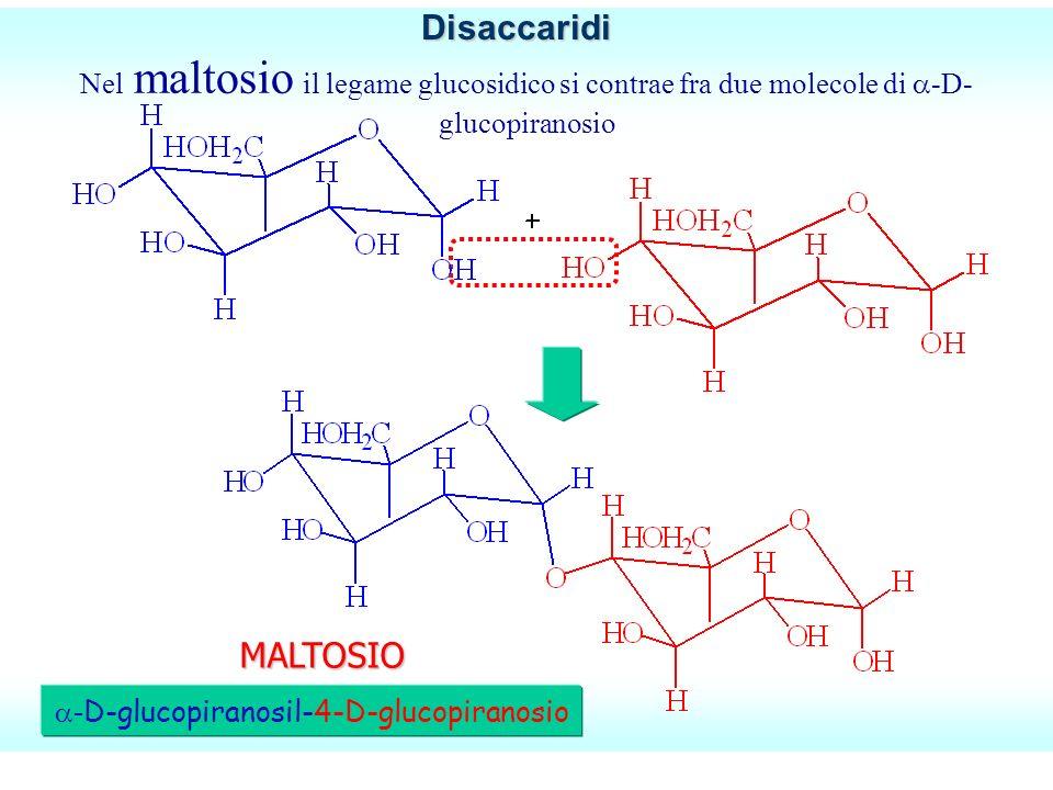 Nel maltosio il legame glucosidico si contrae fra due molecole di -D- glucopiranosio - D-glucopiranosil-4-D-glucopiranosio MALTOSIODisaccaridi