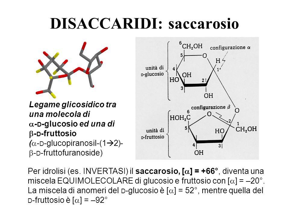 DISACCARIDI: saccarosio Legame glicosidico tra una molecola di - D -glucosio ed una di - D -fruttosio ( - D -glucopiranosil-(1 2)- - D -fruttofuranosi