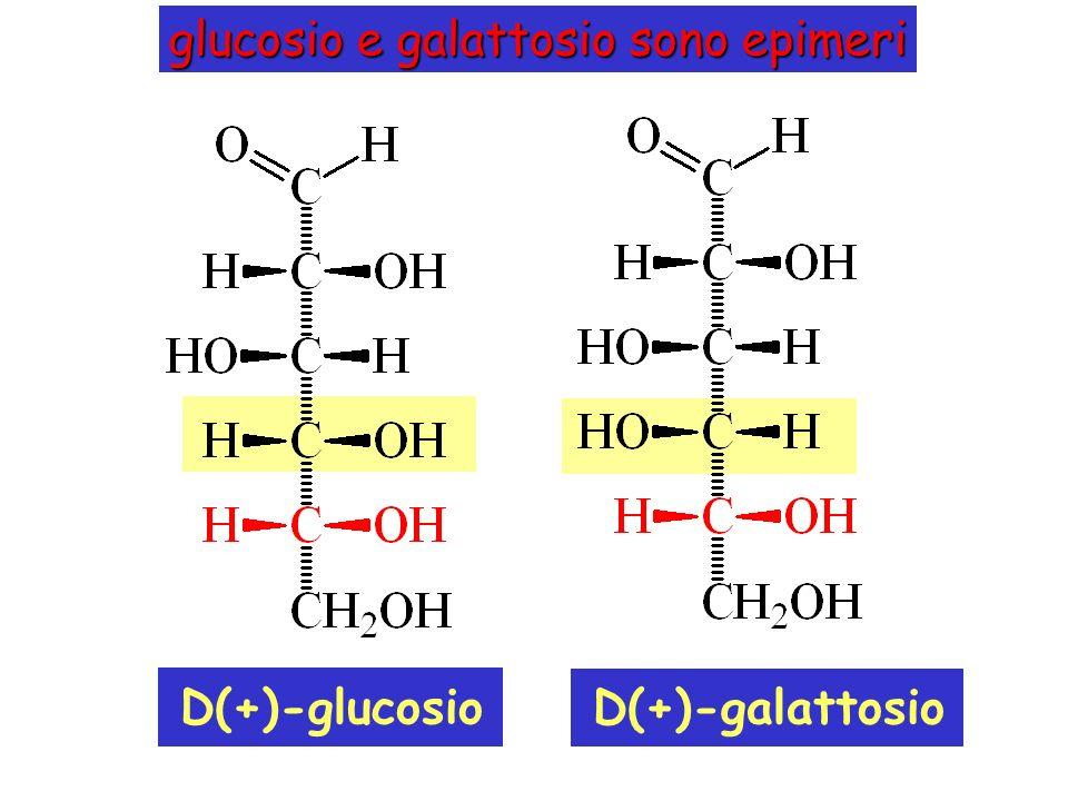 D(+)-galattosio glucosio e galattosio sono epimeri D(+)-glucosio