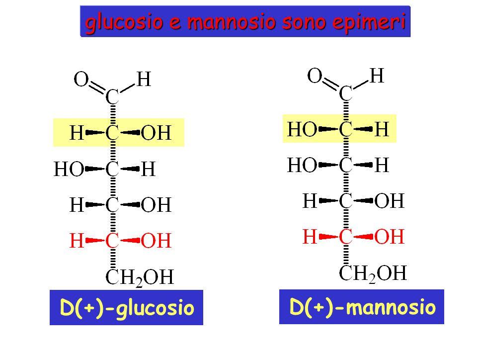 MANNOSIO Il mannosio è un epimero del Glu, differisce al C2.mannosio È parte delle glicolisi, ed è trasformato in fruttosio 6-fosfato Il nome deriva dalla manna, una secrezione di alcuni alberi
