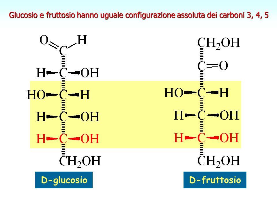 fruttosio Il fruttosio è un cheto-esoso.