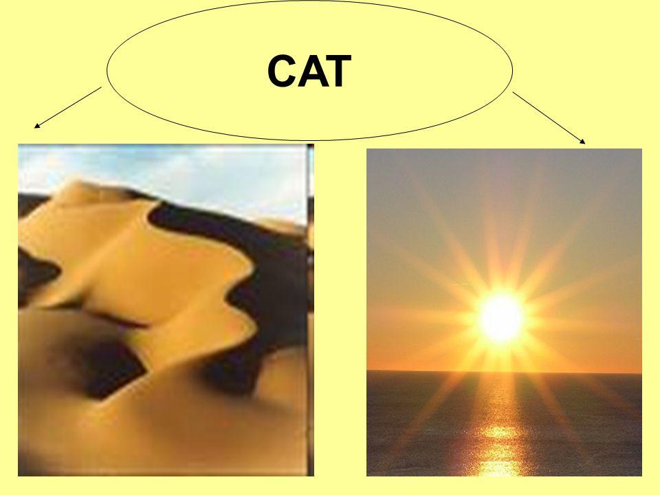 PROPOSTE DI LAVORO Creazione di un archivio sui documenti del CAT e Promozione corsi di aggiornamento, Interclub o/e altro per verificare il lavoro fatto, creando la possibilità di divulgazione.