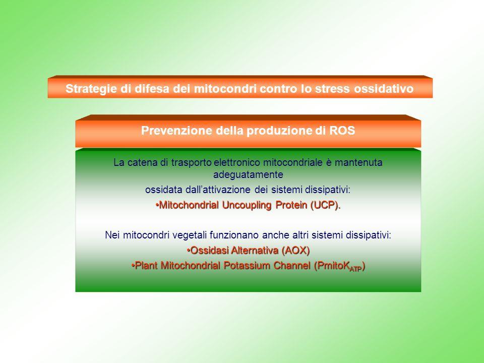 Strategie di difesa dei mitocondri contro lo stress ossidativo La catena di trasporto elettronico mitocondriale è mantenuta adeguatamente ossidata dal