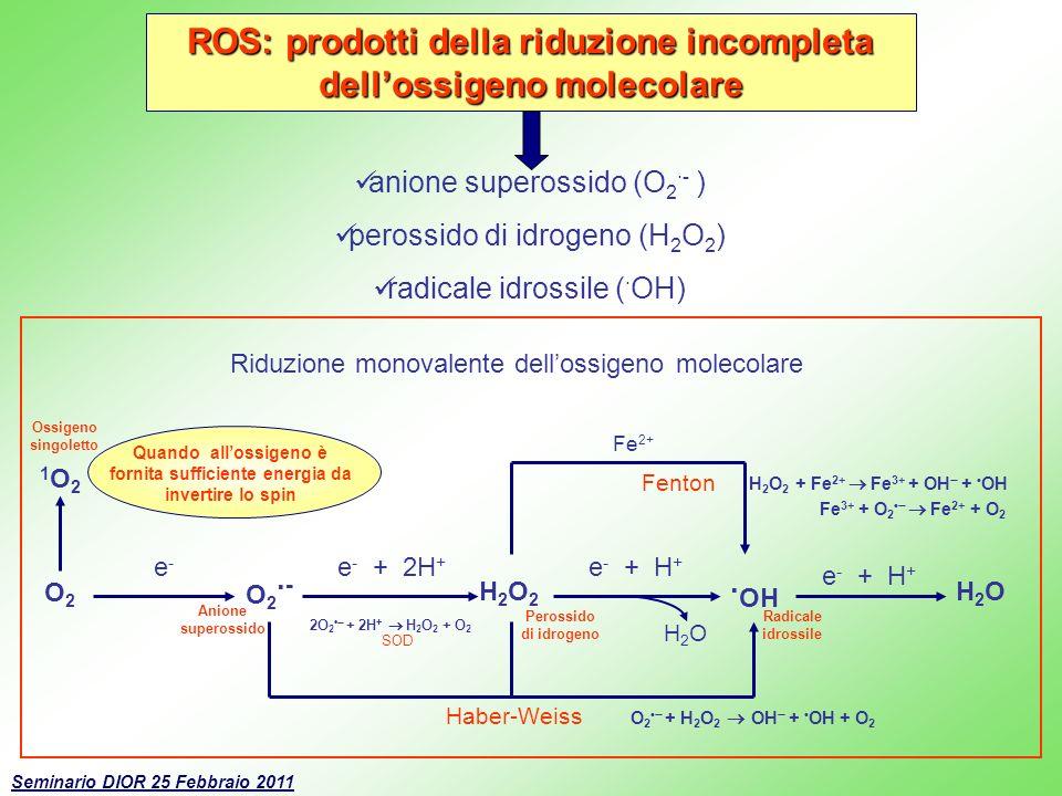 ROS: prodotti della riduzione incompleta dellossigeno molecolare anione superossido (O 2 ·- ) perossido di idrogeno (H 2 O 2 ) radicale idrossile ( ·