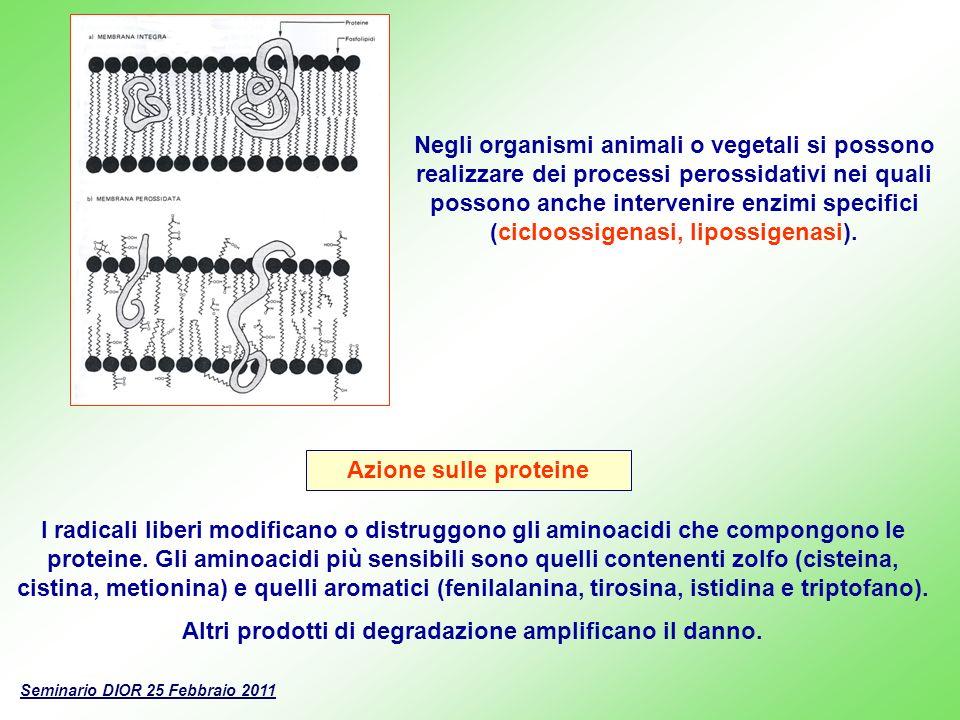 Azione sugli acidi nucleici I radicali liberi possono interagire con il DNA e con gli altri acidi nucleici provocando una serie di danni che vanno dallo svolgimento e frammentazione delle catene polinucleotidiche al distacco delle basi azotate o allalterazione della loro struttura.