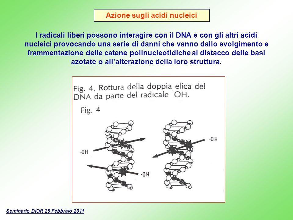 Azione sugli acidi nucleici I radicali liberi possono interagire con il DNA e con gli altri acidi nucleici provocando una serie di danni che vanno dal