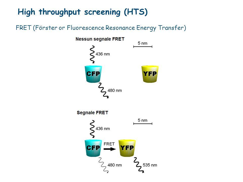 FRET (Förster or Fluorescence Resonance Energy Transfer)