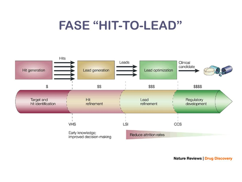 FASE HIT-TO-LEAD