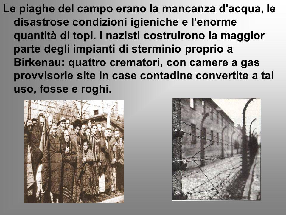 Le piaghe del campo erano la mancanza d'acqua, le disastrose condizioni igieniche e l'enorme quantità di topi. I nazisti costruirono la maggior parte